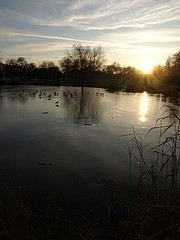 Image of a frozen pond in winter with ducks sitting on the ice.