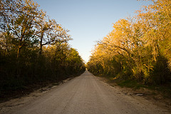A picture of a long, gravel road wih forest on each side.
