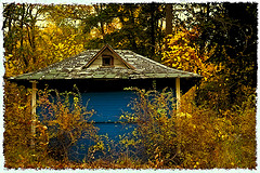 Image of a tiny cottage in the woods.