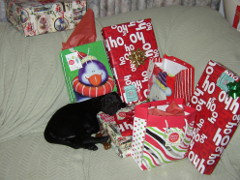 Velvet asleep in Christmas gifts.