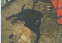 Image of Willy with JD sleeping between his front legs.