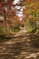 Image of a logging road in the fall with tree leaves in bright colors.