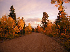 Image of a road in the fall with bright tree colors.